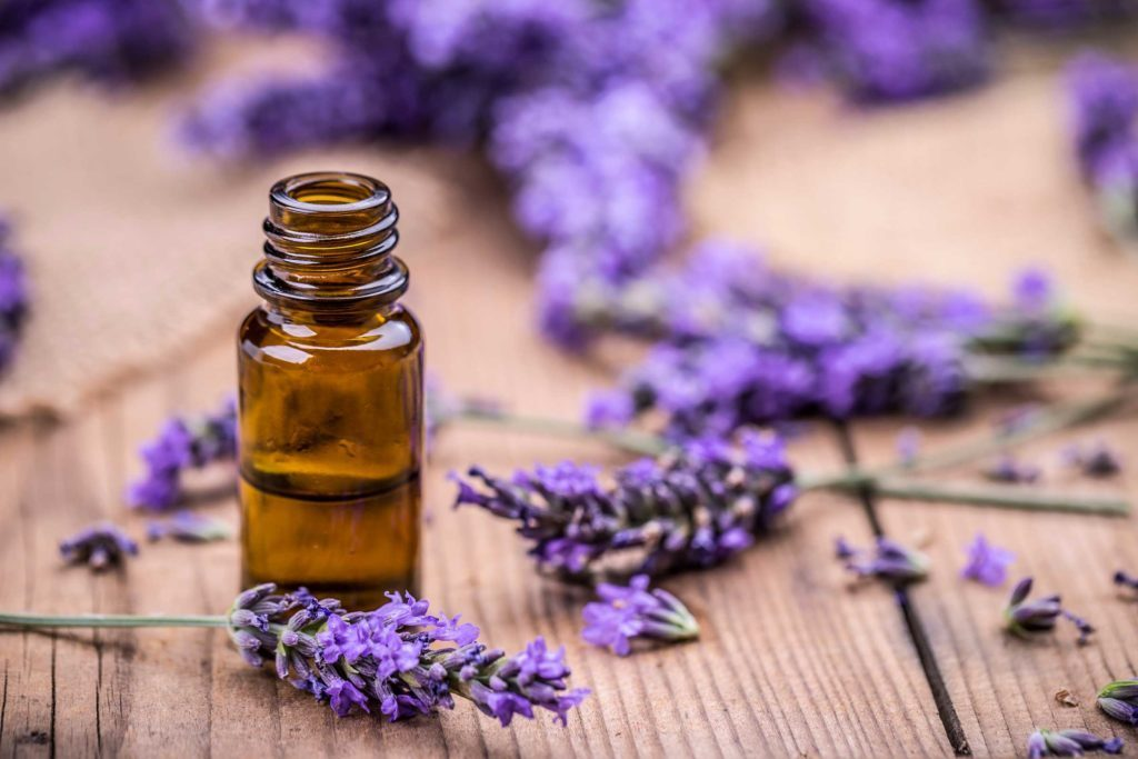 01-Lavender-For-Stress-Relief_100237719_grafvision-1024x683